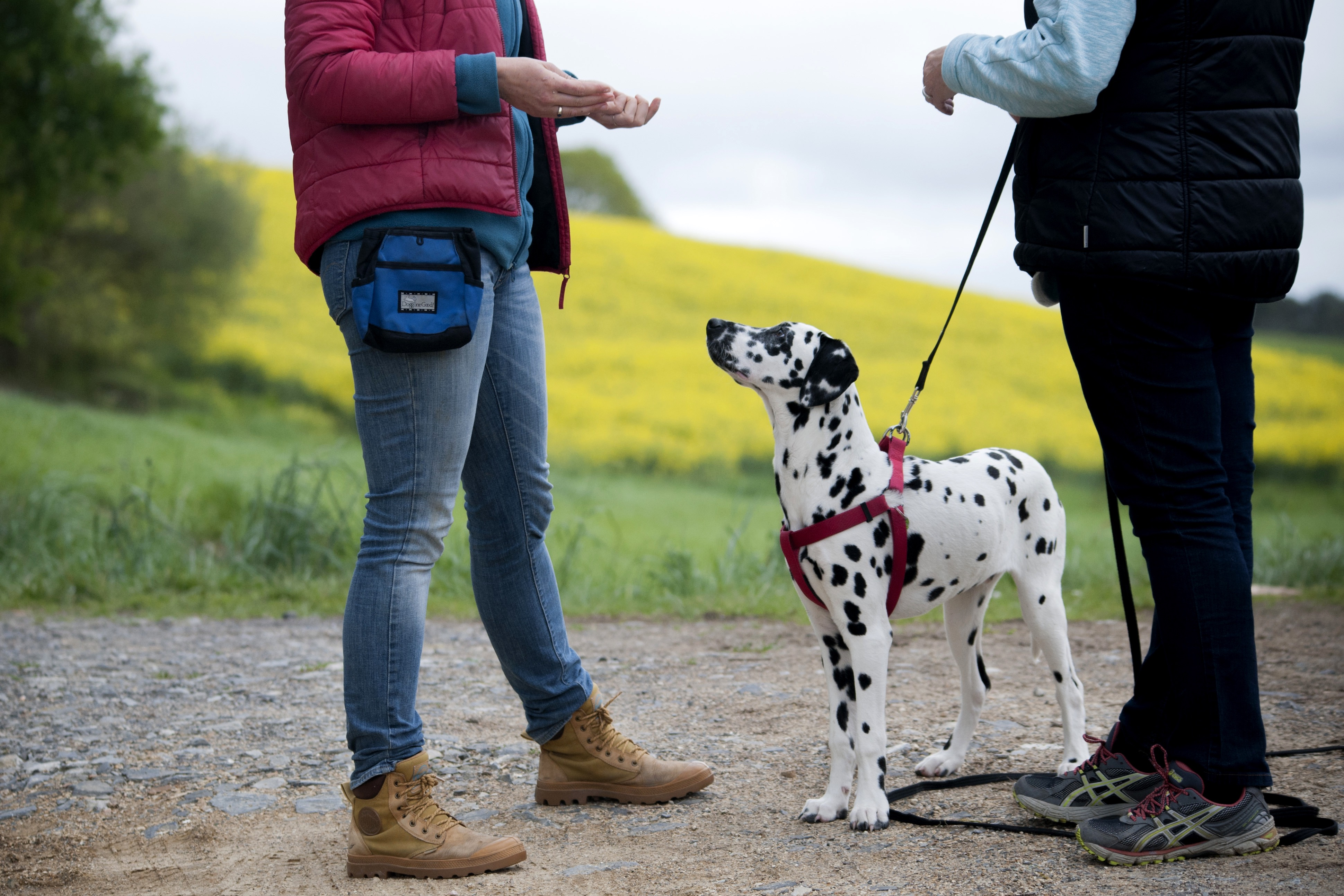 Education et rééducation canine